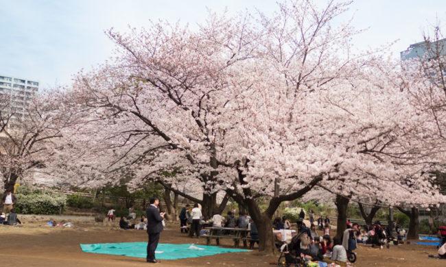 東京ショールーム近くの素敵な桜スポットをご紹介します<FBアーカイブ>